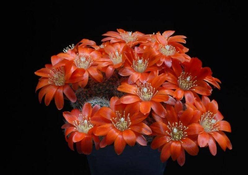 cactuss.jpg