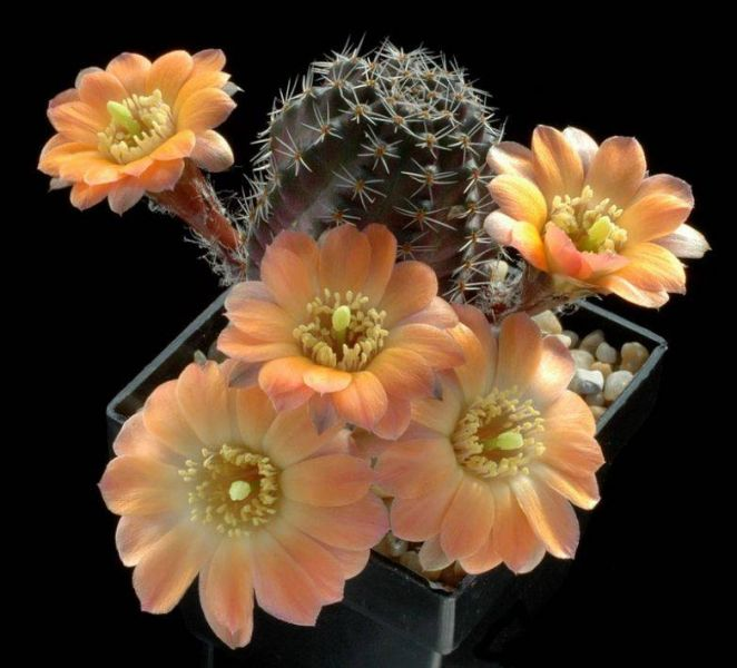 cactusss.jpg